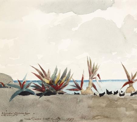 Winslow Homer. Plants on the beach in Nassau