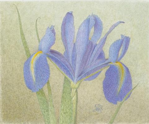 Alexander Leonidovich Mukhin-Cheboksary. Iris (miniature)