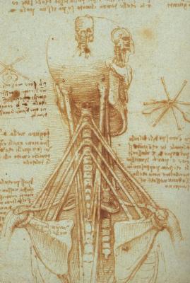 Leonardo da Vinci. Range. Anatomical sketch
