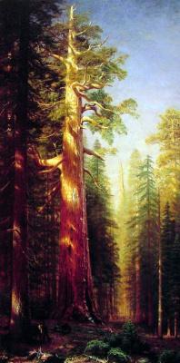 Альберт Бирштадт. Гигантские деревья