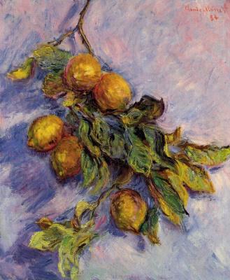 Claude Monet. Branch of lemons