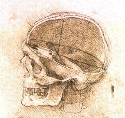 Leonardo da Vinci. The structure of the human skull