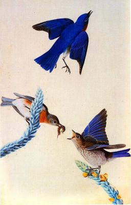 Джон Джеймс Одюбон. Птицы