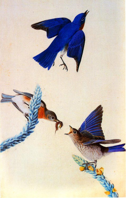 John James Audubon. Birds