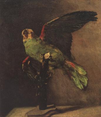 Зелёный попугай