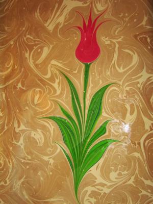 Oedipus Asan. Tulip