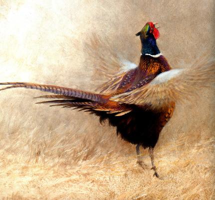 Роберт Бейтман. Поющий фазан