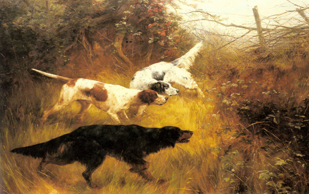 Томас Блинкс. Собаки