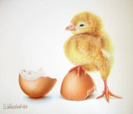 Sophie Wasilewska. Chick