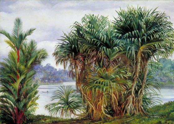 Марианна Норт. Вид сквозь пальмы на реку, Саравак, Борнео