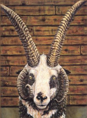 Кимбал Аллен. Овца
