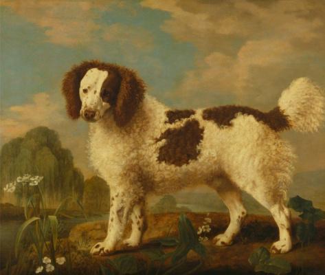 George Stubbs. The Norfolk Spaniel