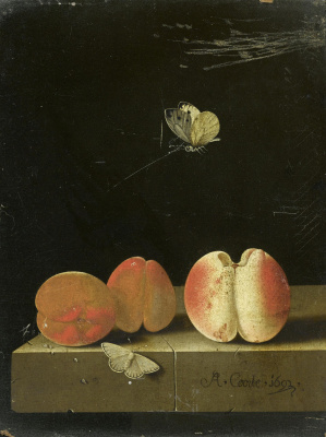 Adrian Coort (Coorte). Still life with a peach and two apricots