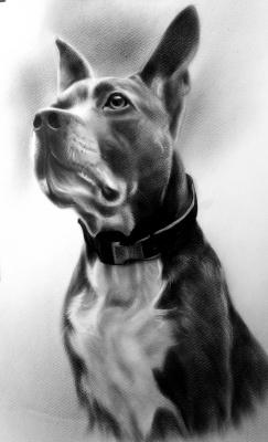 Хельга Эдуардовна Григорьева. Dog, dry brush, 40/50