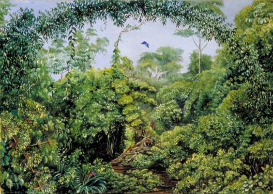Марианна Норт. Тропа бабочек через лес Гонго, Бразилия