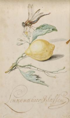 Балтазар ван дер Аст. Лимон и стрекоза