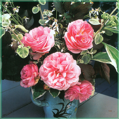 Сахон Холт. Розы