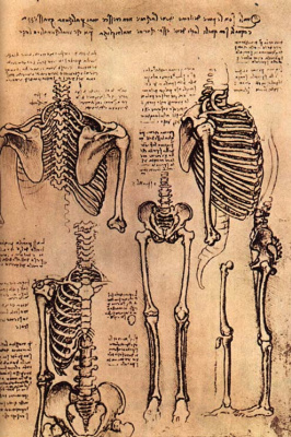 Леонардо да Винчи. Человеческий скелет