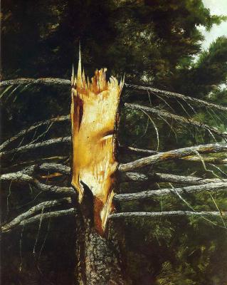 Jamie Wyeth. Spruce