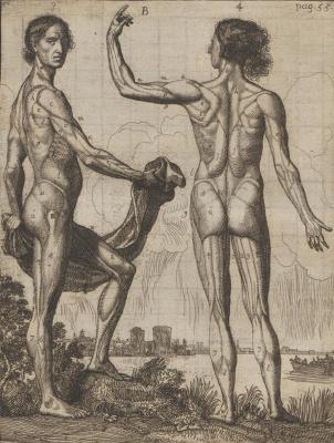 Самюэл ван Хогстратен. Введение в высшую школу живописи. Положение тела