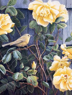 Сьюзан Бордет. Желтые розы - Желтые камышевки