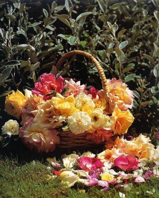 Джей Си Сира. Розы в корзине
