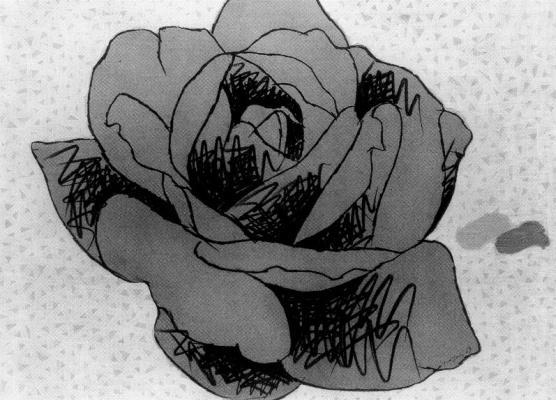 Концетто Позатти. Роза