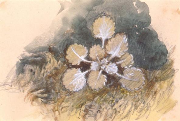 John Ruskin. Leaves. Etude