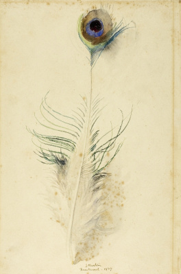 John Ruskin. Peacock feather