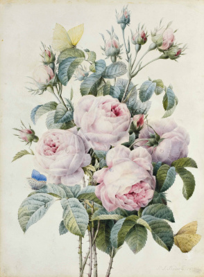Pierre-Joseph Redoute. Pink roses and butterflies