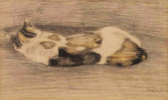A cat lying with his back to the viewer