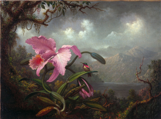 Martin Johnson Head. Orchid and hummingbird