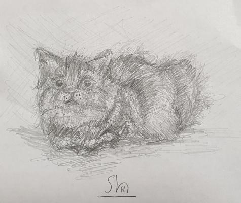 Ruslan Shakirov. Cat