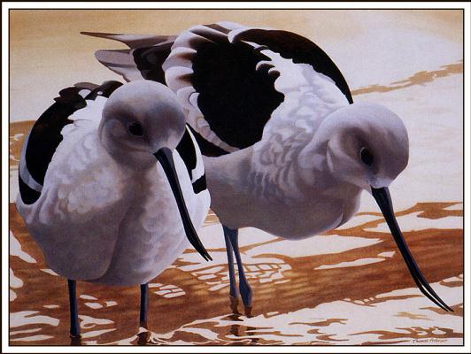 Томас Андерсон. Птицы