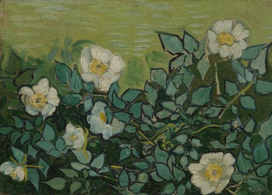 Vincent van Gogh. Wild rose