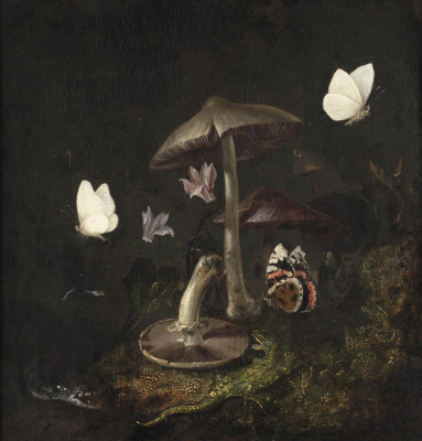 Отто Марсеус ван Скрик. Подлесок с грибами, бабочками, стрекозой, змейки ящерицей