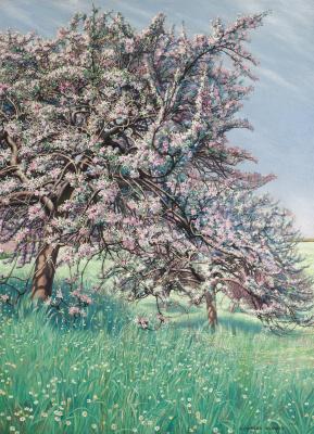 Цветущая яблоня.  1912