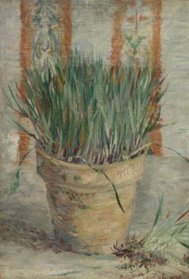 Vincent van Gogh. Flower pot with garlic
