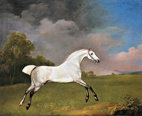 Джордж Стаббс. Серая лошадь в поле