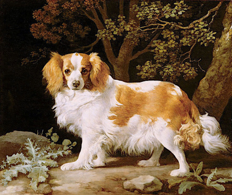 George Stubbs. The cavalier king Charles Spaniel