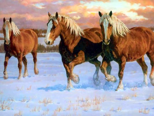 Крис Каммингс. Лошади в тумане 002 зимние золотые бельгийцы
