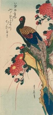"""Утагава Хиросигэ. Фазан, сидящий на скале, и хризантемы. Серия """"Птицы и цветы"""""""