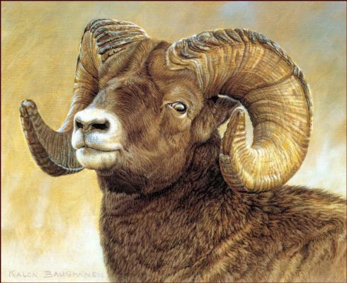 Калон Боган. Большой бараний рог