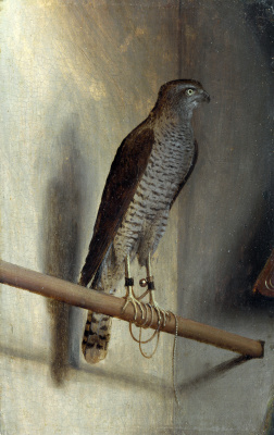 Jacopo de Barbary. Sparrowhawk