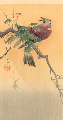 Ohara Koson. Bird on a branch