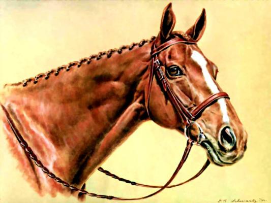 Дональд Шварц. Лошадь 11