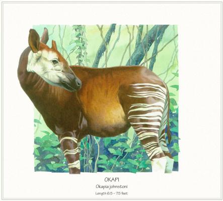 Пол Краттер. Живой тропический лес