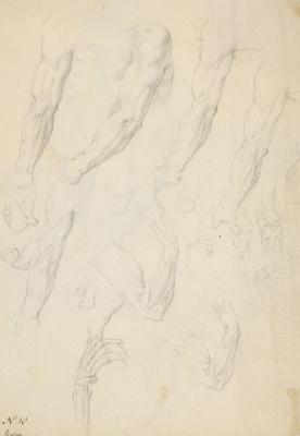 Giovanni Ambrogio Figino(Figino). 解剖学研究