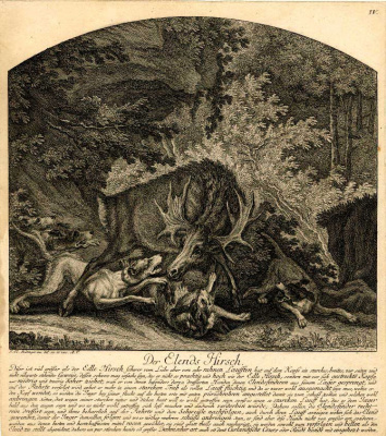 Johann Elias Ridinger. Scary deer