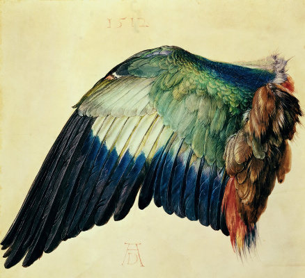 Albrecht Durer. Left Wing of a Blue Roller